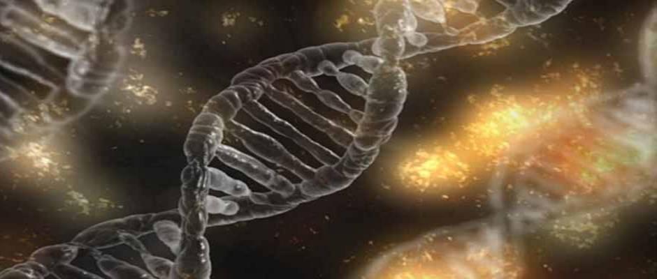 """Estudiaron los """"códigos de barras"""" genéticos de 5 millones de tipos de animales y humanos / CC0 Creative Commons,ADN"""