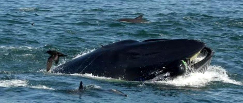 Imagen de Rainer Schimpf al ser atrapado por la ballena. ,buzo ballena, ballena buzo